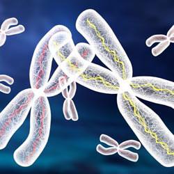 Хромосомний аналіз (каріотип)