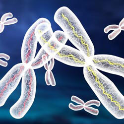 Хромосомный анализ
